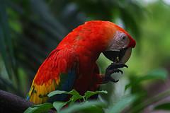 L'AMAZONIE À PUERTO MALDONADO