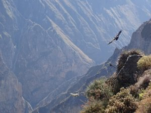 Trek au Canyon de Colca 2 Jours